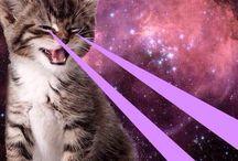 Lsd cats