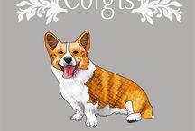 All about corgi
