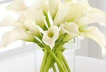 Flores, floreros y plantas