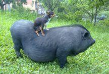 Naše zvieratka / Naša farma