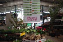 Plantas que Espantam Insetos by Primavera Garden / Conheça as plantas - ervas, temperos e flores - que espantam insetos! Uma seleção by Primavera Garden! #flores #jardim #flores #dengue #paisagismo #decoração