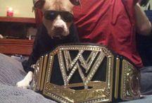 #WWEDogs
