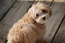Dog blogs / Information for dog lovers