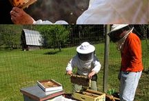 Beekeeping for Gary / by Peggy Jensen