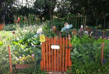 Down on the allotment
