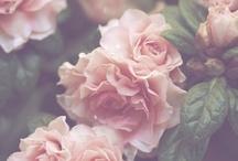 Flowers. ♥