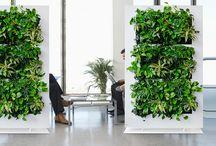kantoor beplanting