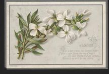 Valentines: jasmine, white (language of flowers) AMIABILITY