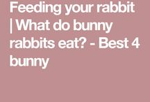 Best food for rabbit