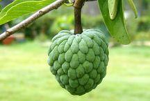 Caribbean Fruit &Veg