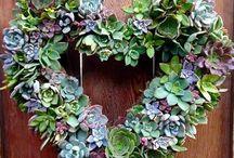 decorazione piante grasse