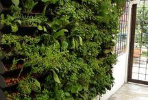 Green / Plantas e jardins