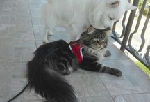 Cats and dogs / ...Even though we are different, we can be good friends!