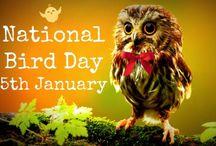 Bird Day Special / Celebrating the National bird day, bird day, and the migratory bird day to celebrate bird watching, spread awareness and save birds from captivity. #birds #birdwatching #birdday #birdphotography