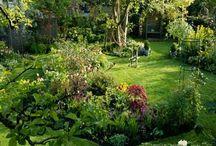 gardening/landscape ideas