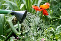 Un petit tour au jardin - In the garden / Un jardin, même tout petit, c'est la porte du paradis. Marie Angel