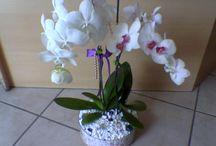 Çiçeklerim