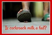 Cockroach Milk   How Did We Get Here? / cockroach milk