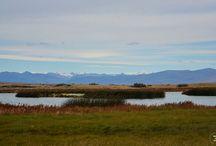 """Reserva Laguna Nimez / Emplazada sobre la margen sur del Lago Argentino, en la zona """"baja"""" de El Calafate, la Reserva Laguna Nimez invita a realizar un viaje a través del humedal patagónico, rico en diversidad de aves y plantas autóctonas."""