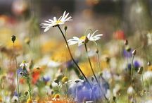 How to grow a wild meadow