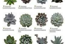 Succulents and other plants