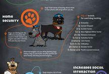 Pet Care & More