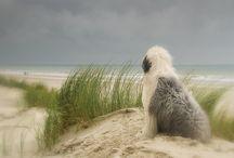 Animal Lovies / Wonderful creatures. / by Renee' ~~<3~~