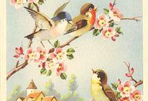 πουλια και πεταλουδες