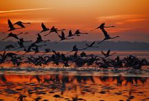 Birds Flying Back Home! / Birds Flying Back Home!  -----------------------------------------------------------------------------  SULEMAN.RECORD.ARTGALLERY: https://www.facebook.com/media/set/?set=a.437791526430872.1073742304.286950091515017&type=3  Technology Integration In Education: