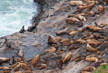 Northwest Coast Wildlife / by Coast Explorer Magazine
