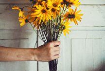 flowers / by Kim Eldridge