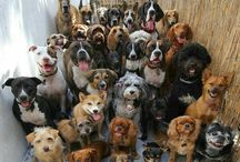 Animal group photo. / Pin Whatever inspires you. No limets ! Enjoy & come back.  / by Maria 50girl