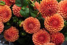 Lovely flowers / my board / by MaryAnne Duszlak