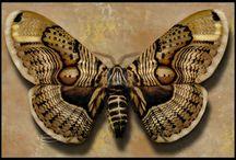 Butterflies/Moths / by Susan Hoyt