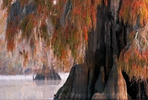 My Home is in Louisiana / by Becky Jeffress