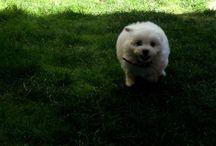 Misha - 6kg pure fluff