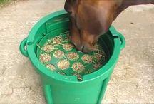 Eazigrazer in Action (video) / Videos of Eazigrazer hay feeder in action