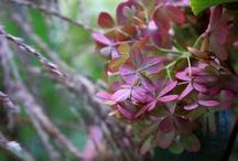 Blumenwand / Aus meinem Garten :)