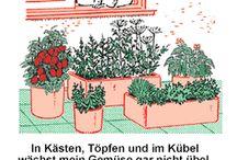 Ideen für Wohnung - Pflanzen