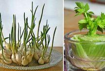 Pěstování zeleniny,květin