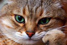 cat quotes and images