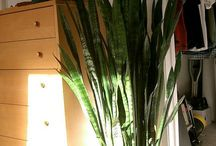 House Plants - Easy to Grow