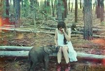 en çok fil severim.