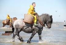 Horses Job