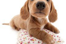 I ♥ dog
