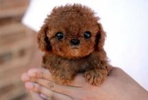 puppy / by ♥  anne makeup ♥