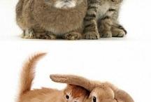 Kitten Rabbits Love