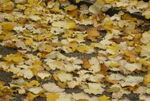 Autumn in love / My favourite season.