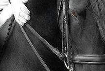 cavalos / joque