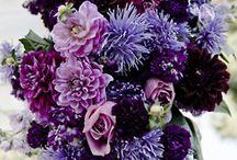 Floristic. Flowers.